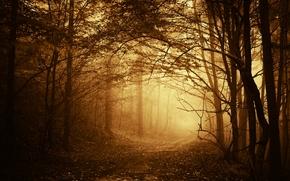 foresta, nebbia, alberi, ramo, strada, sentiero, autunno