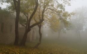 Trees, fog, fortress, autumn