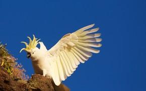 uccello, Pappagalli, sfondo