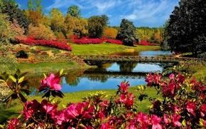 речка, мостик, рододендроны, деревья, кусты, пейзаж, парк
