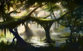 Art, jungle, tree, thicket, liana, water, swamp, pond