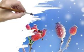 hand, brush, snow, Berries, frost