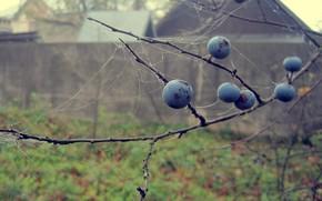 Berries, drops, macro, autumn