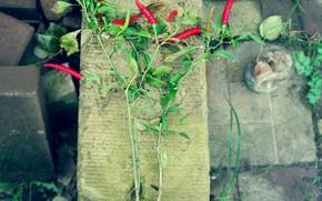 pepper, bush, burning, chili, red