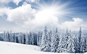 inverno, abete rosso, Alberi di Natale, alberi, sole, cielo, nuvole, nevicata, Montagne