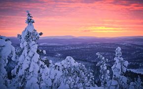 Finland, Lapland, Winter, January, snow, forest, sunset, sky, sampsa wesslin rhotography