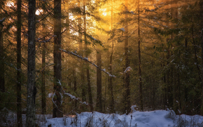 British Columbia, Vancouver Island, nature, Winter, forest, light, peter sinclair photography
