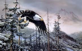 malarstwo, orze, Ptaki, las, wystroi, Gry, zima, Bielik, Bielik