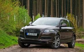 road, forest, Audi, Audi