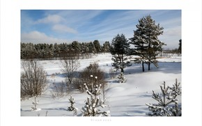 Winter, nature, snow
