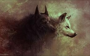 арт, волк, волчица, звери