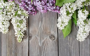 lilac, board, tree, background