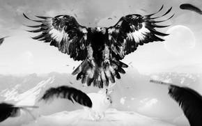 орел, заяц, арт, птица, перья, горы