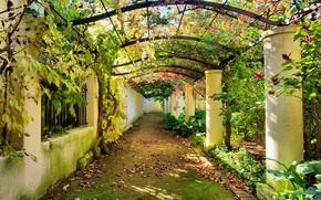 autunno, giardino, arco, traccia, fogliame, fiori, colonna