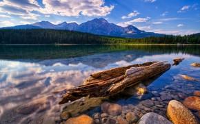 вода, прозрачная, лес, берег, коряга, камни, горы