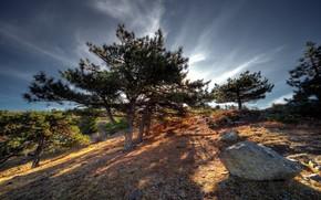 mountain, Trees, landscape