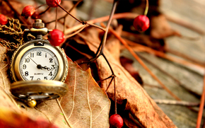 watch, Pocket, autumn, leaves, Berries, red, dry
