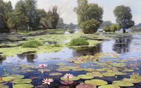 immagine, paesaggio, lago, riflessione, stagno, fiori, loto, alberi, lemna, acqua, fiori