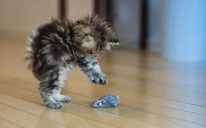 gatto, gattino, spavento, situatsyya, giocattolo, mouse, piano, grigio, lanuginoso