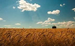 estate, grano, campo, oro, spighette, cielo, nuvole