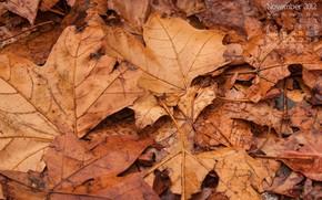 ноябрь, календарь, числа, листья, листва, осень