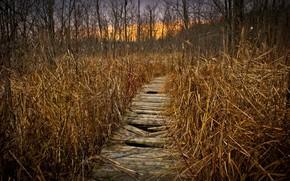 jesie, natura, most, krajobraz