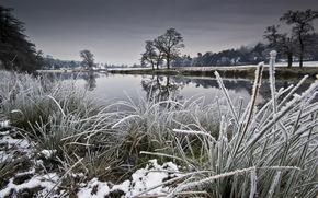 河, 冬季, 性质, 景观