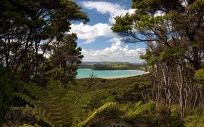 ニュージーランド, 湖, 木, 風景