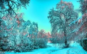 neve, inverno, alberi, blu, luce, gelo