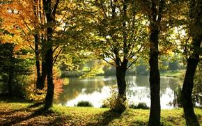 осень, золотая листва, озеро, забор, отражения, деревья, солнечный свет