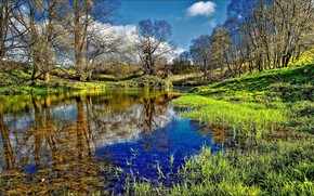 forest, Trees, small river, channel, water, reflection, Green, grass