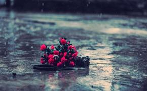 Mood, Flowers, Camera, Rose, red, rain, water, asphalt, land, background, wallpaper