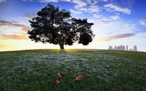 drzewo, wzgrze, trawa, listowie, korona, miasto
