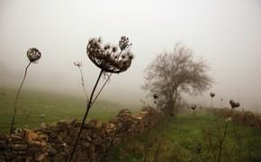 Gras, Zaun, Baum, Nebel
