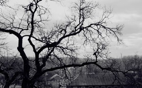 tree, branch, black and white, roof