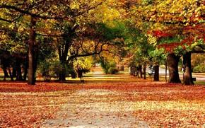 осень, природа, парк, лавочка
