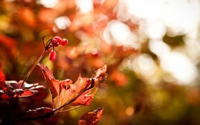 list, macro, red, autumn, Berries