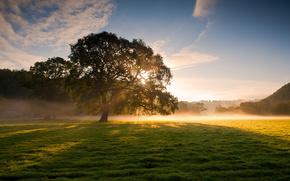 Naturaleza, rbol, hierba, roco, niebla