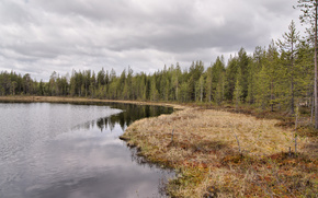 hdr, forest, lake