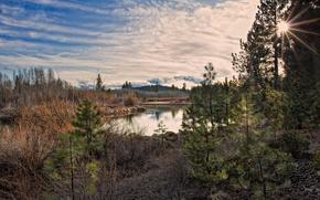 Promienie, soce, rzeka, Gry, las, natura