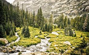 деревья, горы, пейзаж, лес, природа