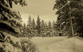 hiver, fort, neige, Nature
