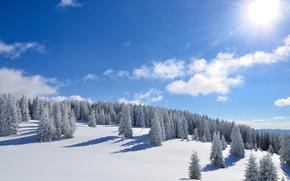 Winter, sun, forest, Trees, snow