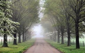 strada, alberi, nebbia