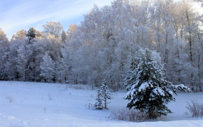 forest, Winter, Trees, sky, day, drifts