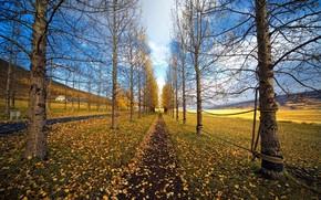 道路, 线索, 树, 绳, 简单的, 草, 叶子, 秋天, 叶子
