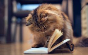 gato, gatinho, livro, caderno, andar, Pgina, jogo