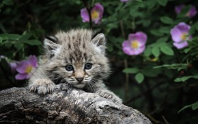 cat, kitten, gray, claws, hunting, eyes, Kamin, background, leaves, flowers look