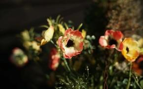artificiali, non fiori veri, Tessuto fiori, fiori di plastica