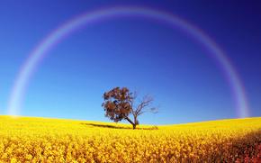 范围, 领域, 树, 彩虹, 天空